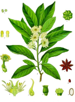 Anise oil, Star, China