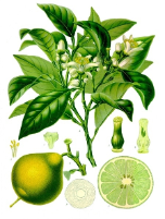 Bergamot oil FCF, China