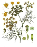 Fennel oil, Bitter, USA