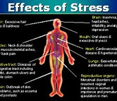 Go To Products Stress and Mood Support.