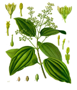 Cinnamon Leaf oil ECOCERT, Madagascar